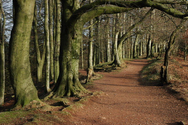 Footpath through trees, Clent Hills