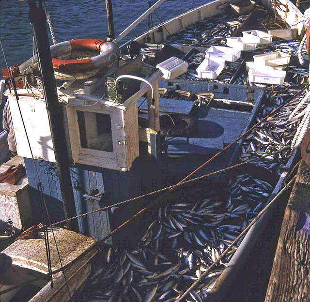 Mackerel boat at Looe