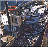 SX2553 : Mackerel boat at Looe by Trevor Rickard
