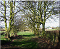 SO5688 : The Shropshire Way near Holdgate by Roger  Kidd