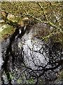 NX2953 : Castle Loch burn by David Baird