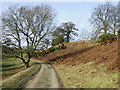 SO5187 : Track to Munslow Common, Shropshire by Roger  Kidd