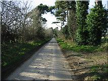 TR3153 : Lane near Updown Farm by Nick Smith