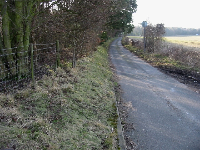 Looking S along road to Betteshanger, Sangrado's Wood on the left
