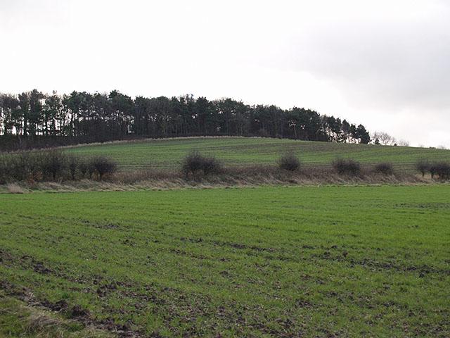 Hambleton Hill