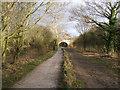SJ3477 : The Wirral Way, near Willaston by BrianPritchard