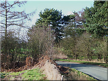 SO8388 : Lane by Enville Golf Course, Staffordshire by Roger  Kidd