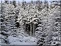 NH6286 : Winter wonderland by sylvia duckworth