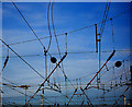 SE5703 : Tangled web by Steve  Fareham