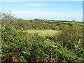 SW4433 : Hedges and fields near Trythall Farm by David Medcalf