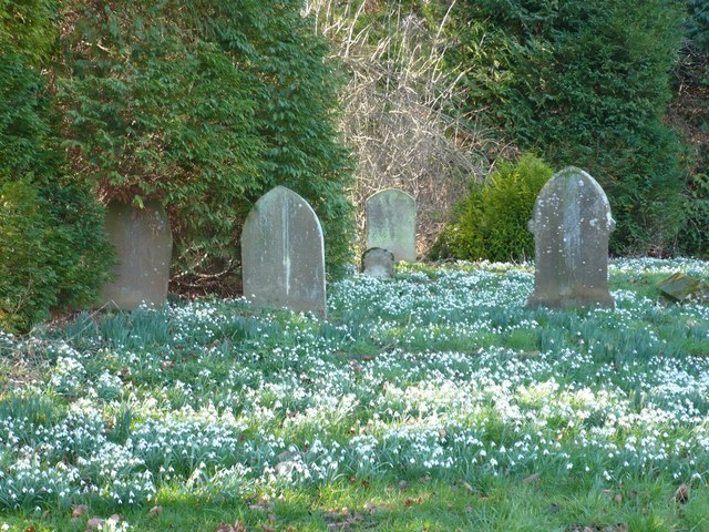 Snowdrops in the churchyard at Challock