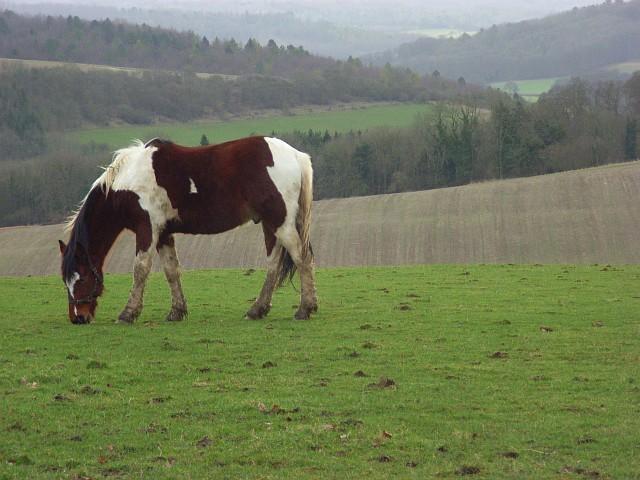 Horse at Studdridge Farm