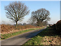TG1626 : View NE along Heydon Road by Evelyn Simak