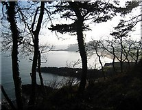 J4583 : Trees, Helen's Bay by Rossographer