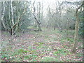 NZ2050 : Ousterley Wood by brian clark