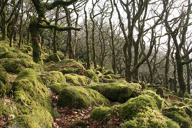 Dartmoor Forest: Wistman's Wood