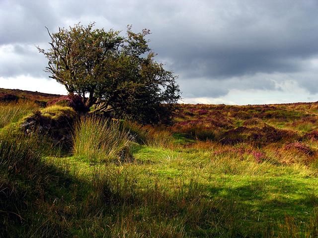 Dartmoor near Warren House Inn