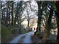 SN6579 : The Vale of Rheidol Railway by John Lucas