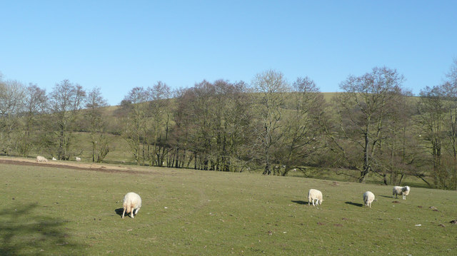 Sheep pasture in the upper Redlake valley
