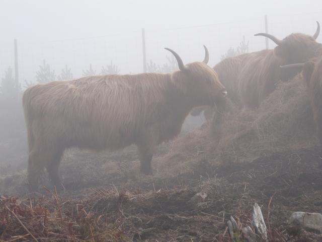 Moos in the mist! by sylvia duckworth