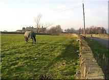 SE1220 : Field, Pinfold Lane, Rastrick by Humphrey Bolton
