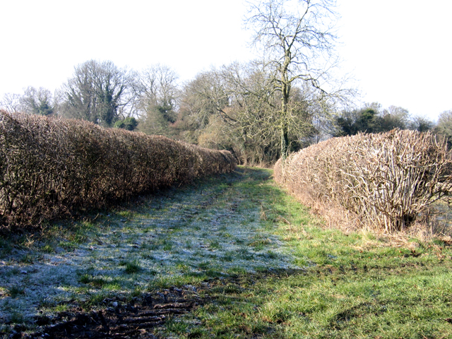 Bridleway between Cowick Farm, Hilmarton, and Whitley Farm, Calne, Wilts.