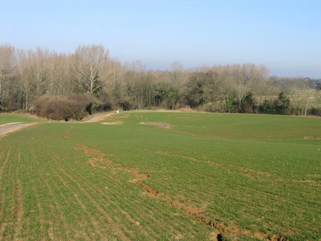 Rill erosion in a wheat field, Nocketts Hill, Calne, Wilts