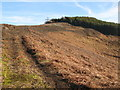 NY9150 : Track and moorland north of Beldon End Plantation by Mike Quinn