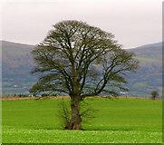 J3267 : Tree near the Giant's Ring, Belfast by Rossographer