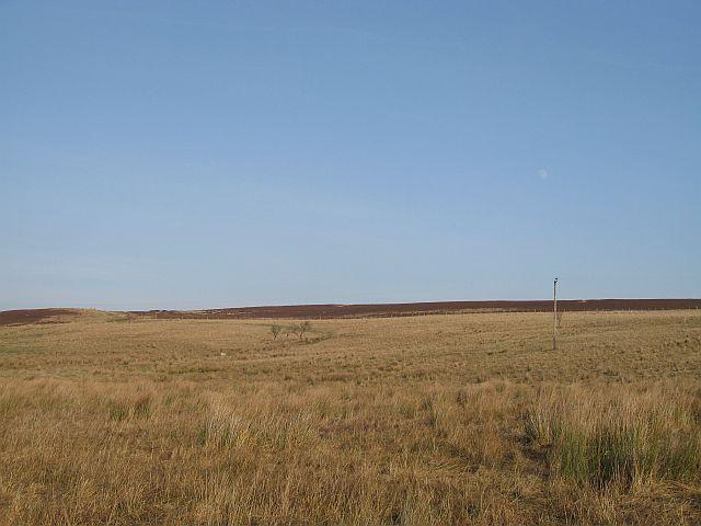 Rough grazing, Longstone Hill