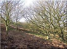 SE1220 : Hillside under Fixby Ridge, Fixby by Humphrey Bolton