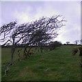 SN5470 : Tree-lined field boundary near Penlan farm by Rudi Winter