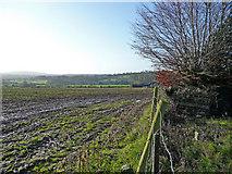 T1567 : Stubble field by Jonathan Billinger