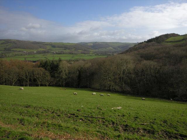 Hillside south of the Afon Rheidol