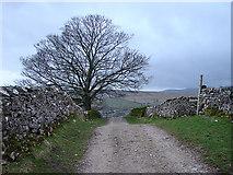 SD8172 : Tree beside the Pennine Way by John Lucas