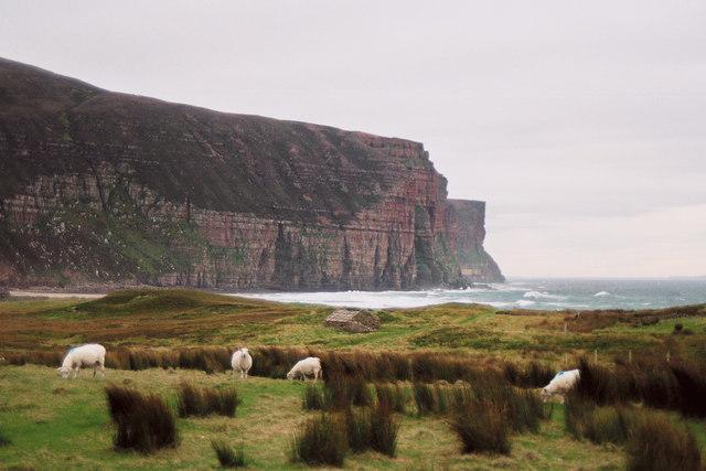 Rough Sheep Pasture at Rackwick by Richard Kay