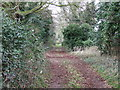 TF7701 : Hedge lined path by Keith Evans