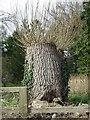 TF7904 : Hedgehog tree stump by Keith Evans
