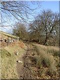 SJ1663 : Clwydian Way by David Quinn