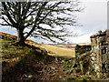 NC7204 : Abandoned croft, Little Rogart by sylvia duckworth