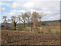 NY9965 : Arable land and woods near Cor Burn (2) by Mike Quinn