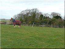 SW9545 : Horse in a paddock. by Jonathan Billinger