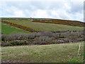 SW8666 : The Retorrick Valley by Jonathan Billinger