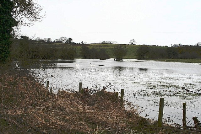 Loughanstown Pond
