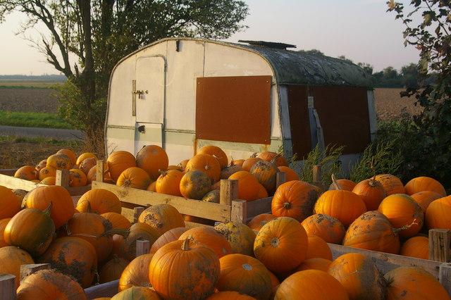 Pumpkin caravan