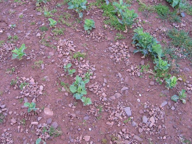 Earthworm stone mounds