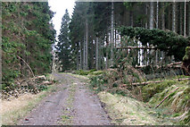 NY6491 : Fallen Trees by Peter McDermott