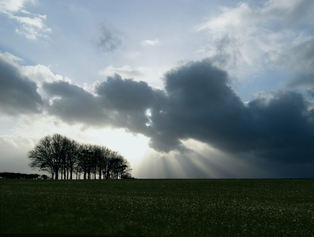 Clump of trees with sun rays below the clouds