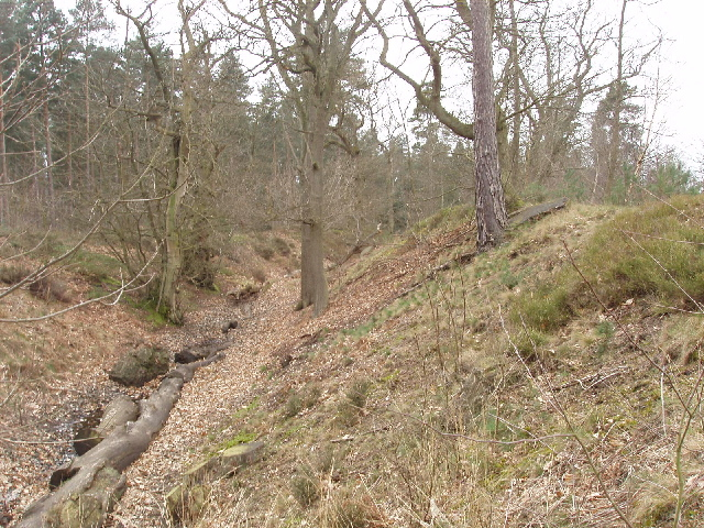 Bank and ditch of Caesar's Camp, Bracknell