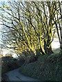 SX1786 : Lane near Treglasta Bridge by Derek Harper